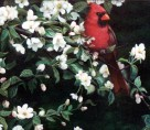 Cardinal & Apple Blossoms