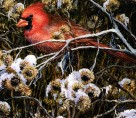 Cardinal and Thistles