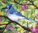 Apple Blossoms & Blue Jay