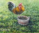 Rooster on water Bucket