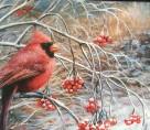 winter Cardinal _Dodds